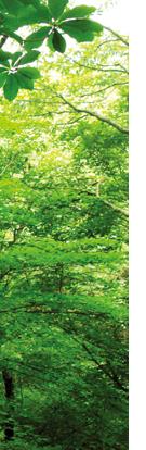 중간 이미지 나무